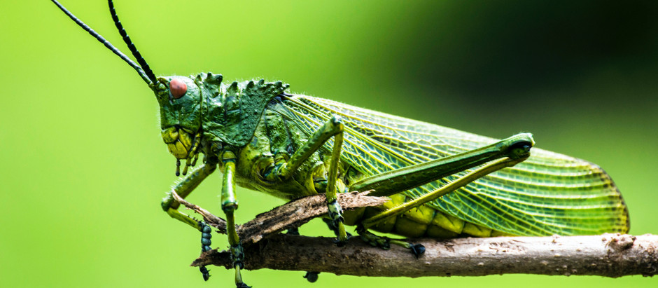Are Insects the Food of the Future?