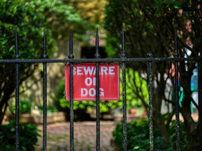 Beware of Dogs: Do I Need A Personal Injury Lawyer?