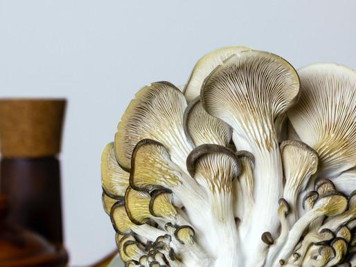 Quels vins boire avec des champignons ?