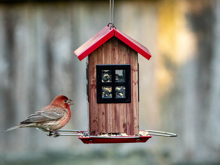 How to Feed Birds on Patio or Apartment Space
