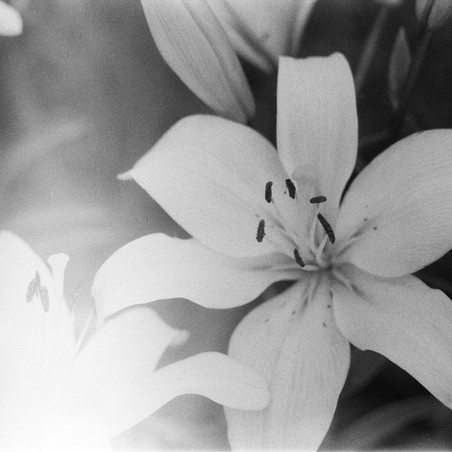 Faith and Life: Consider the Lilies and How They Grow