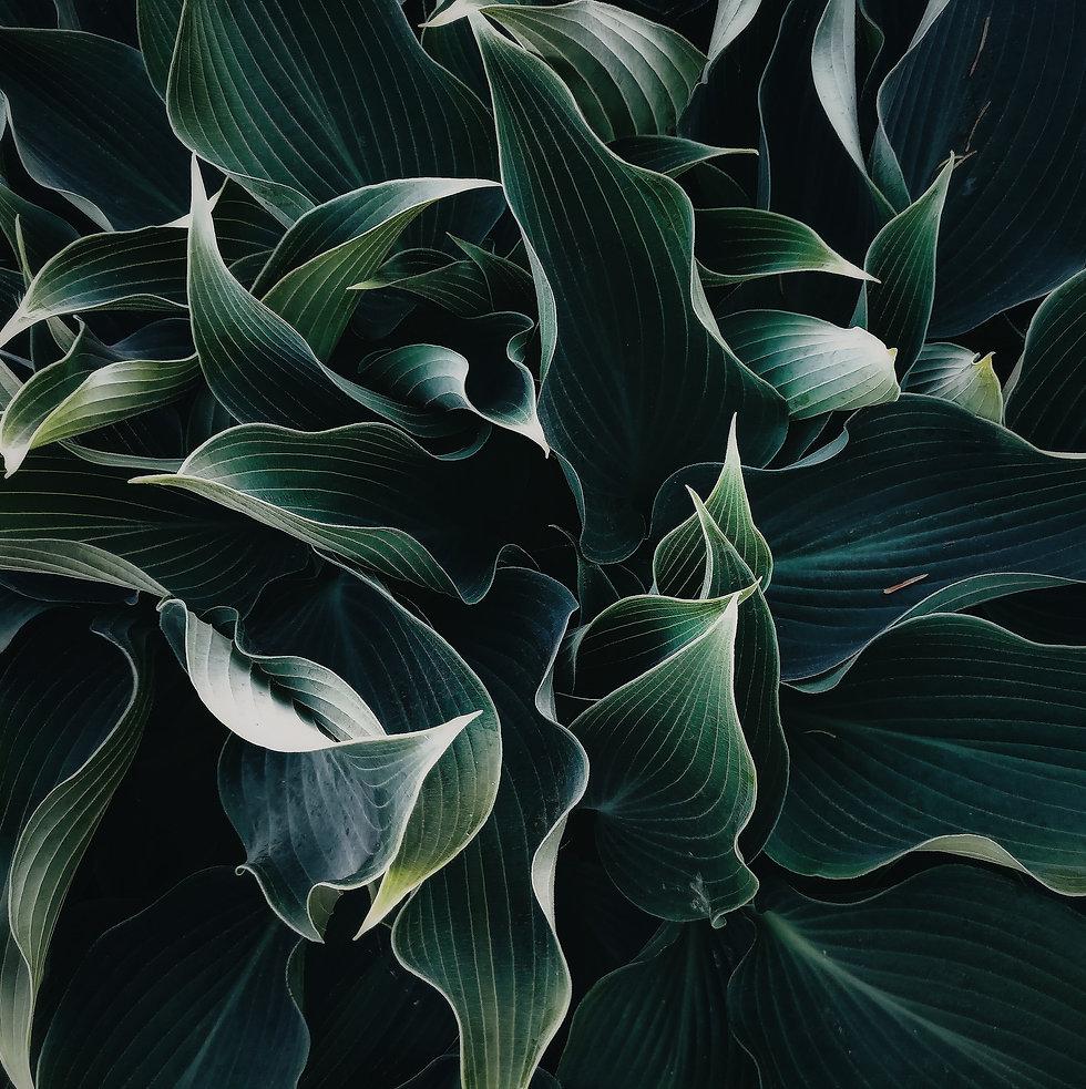 Image by Chulpan Gallyamova
