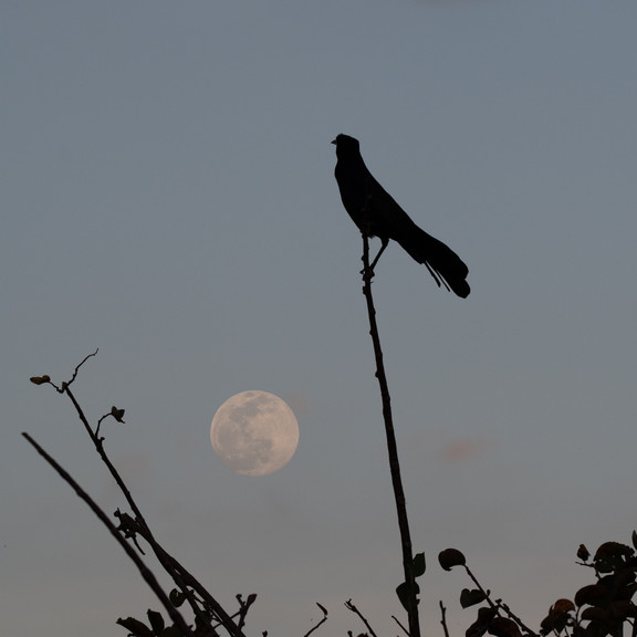 Celestial Archer (Sagittarius Moon 5.26.2021)
