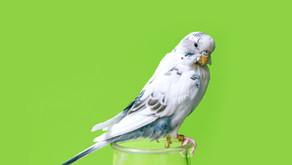 Top 5 Friendly Pet Bird Species