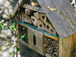 Back to Nature: Bee Hotel Controversy
