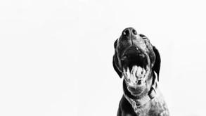 Mordeduras de perro en las manos