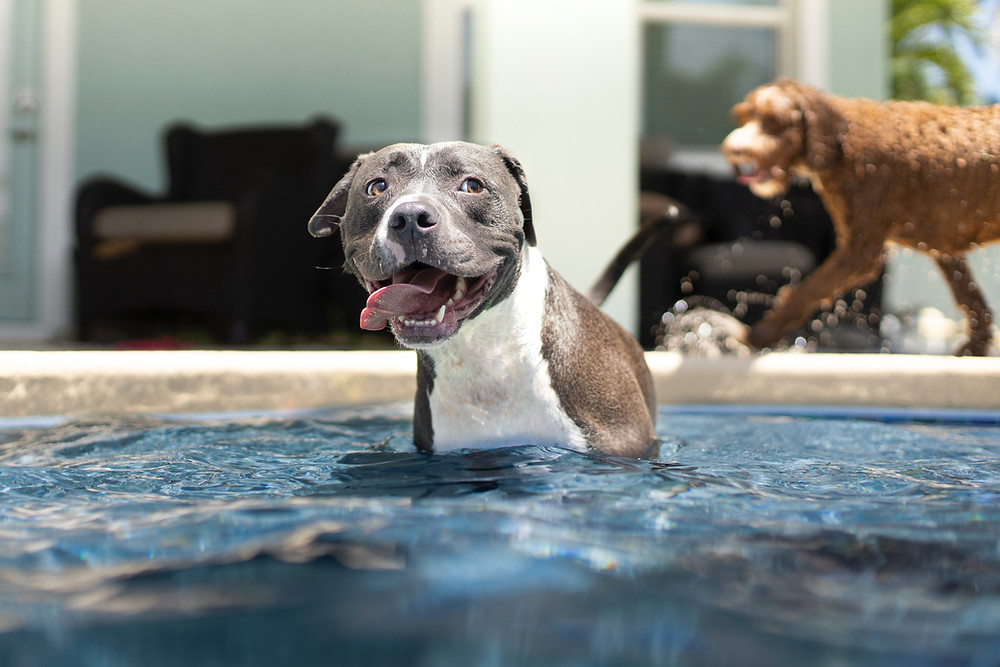 Safe Ways to Exercise Dogs in the Heat