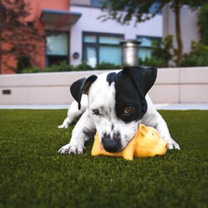Warum schütteln Hunde ihr Spielzeug mit dem Maul?