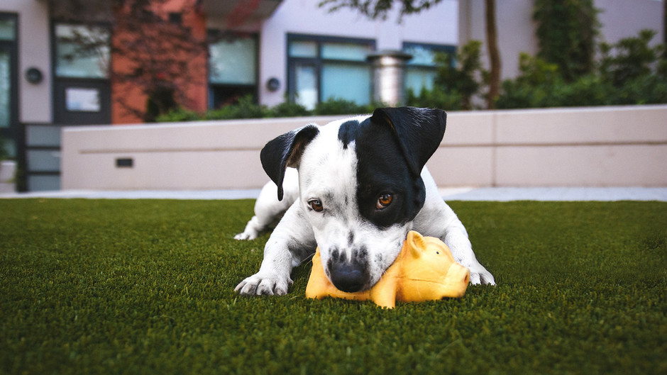 Moving With Your Dog: 4 Ways to Make Long Distance Moves Easier