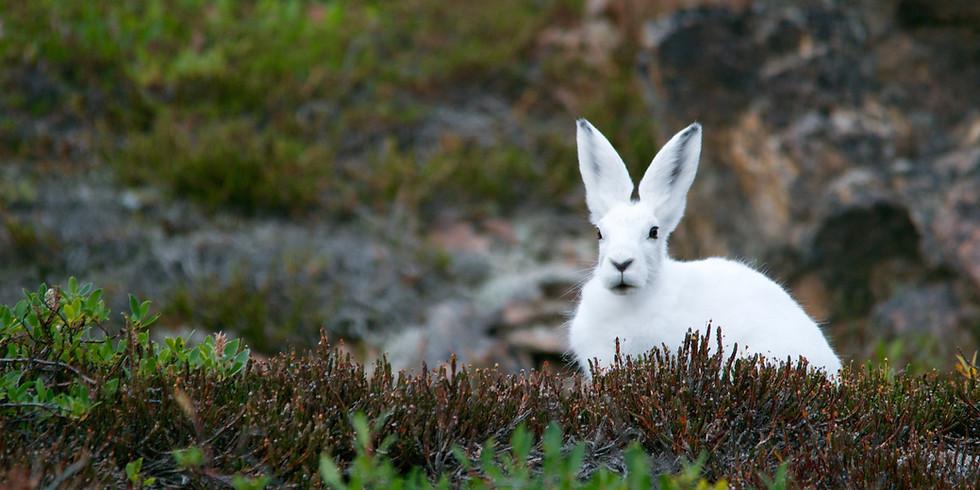 White Rabbit Easter Trail