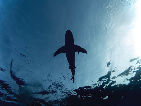 Generous and Wrathful Gods