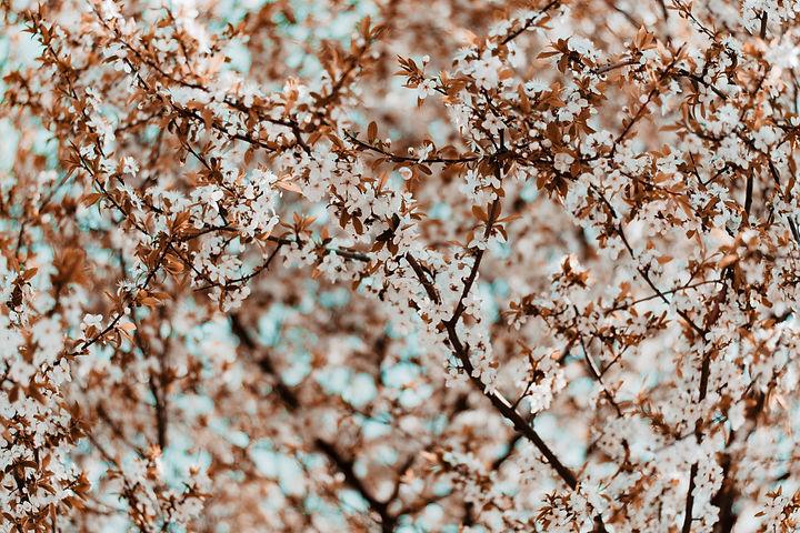 Image de Irina Iriser