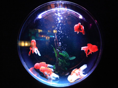 Making Donors Feel Like Tiny Fish In A Big Crowded Pond