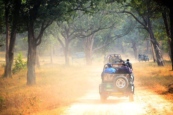 India: Magical Wildlife & Captivating Safaris