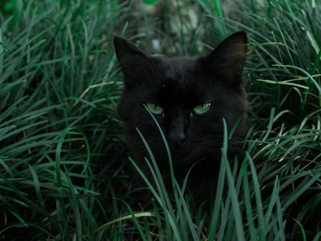 Why does my cat keep eating grass?