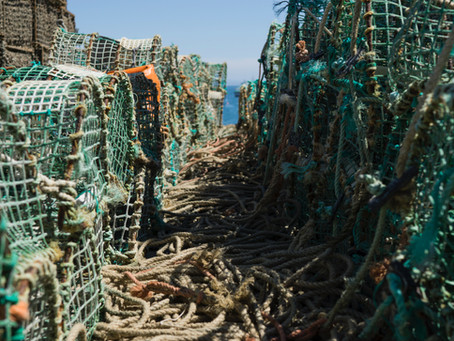 NEW INSHORE FISHERY REGULATIONS - *FOLLOW UP*