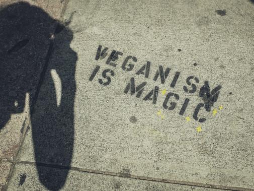 Practical Vegan Recipes