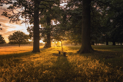 Image by Simon Wilkes