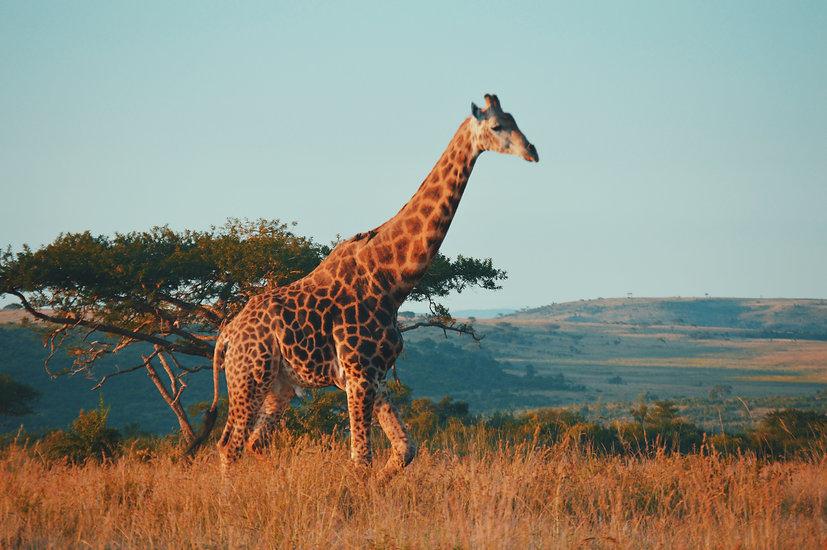 sudafrica_viajes_aventura