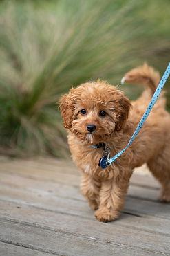 Dog Walking in Hicksville New York | Bird Girl Pet Services