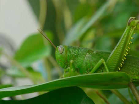 Cast Down the Grasshopper Mentality