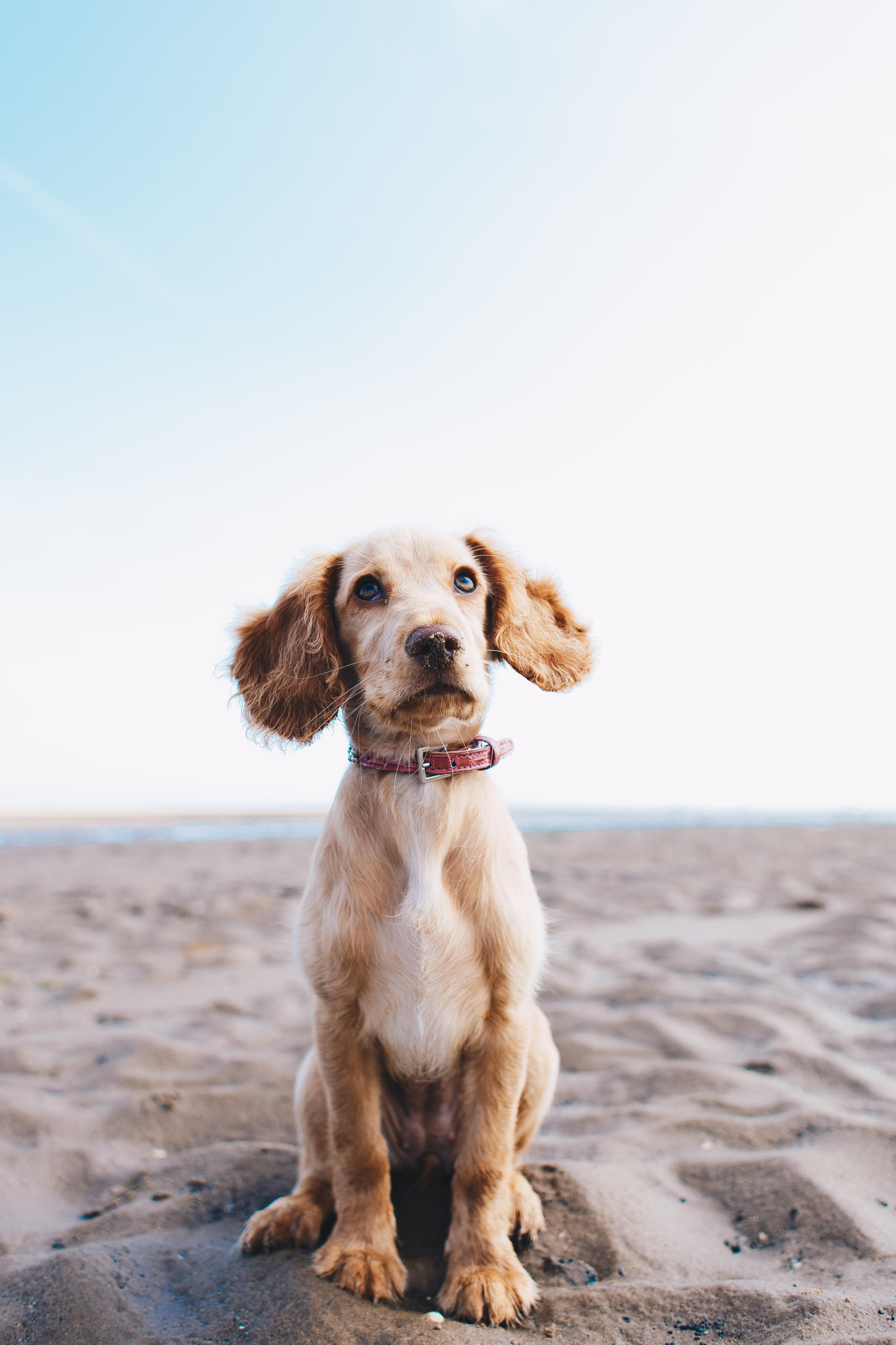 Medium Dog Wash