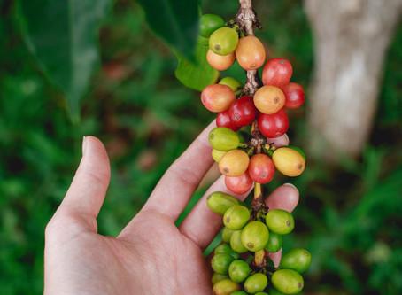 Perguntas difíceis #1 - Por que o café de especialidade custa mais caro?