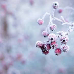 Garden Cold Snap Suggestions