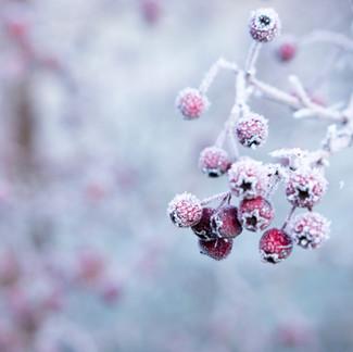 Winter Interest Plants