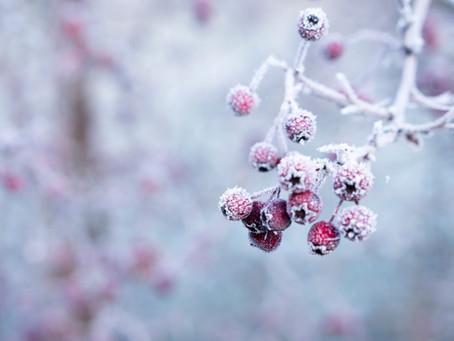 Flor Box OXO | Flower Garden + DIY | Winter Garden