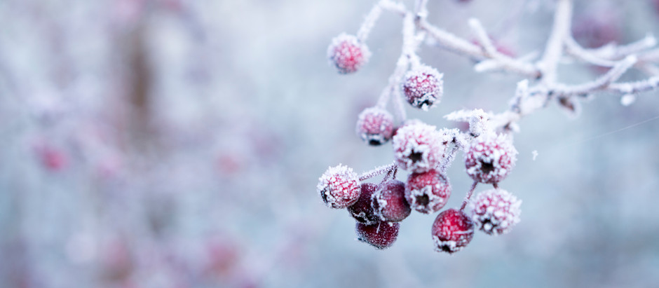 Top Tips for Gardening in Winter