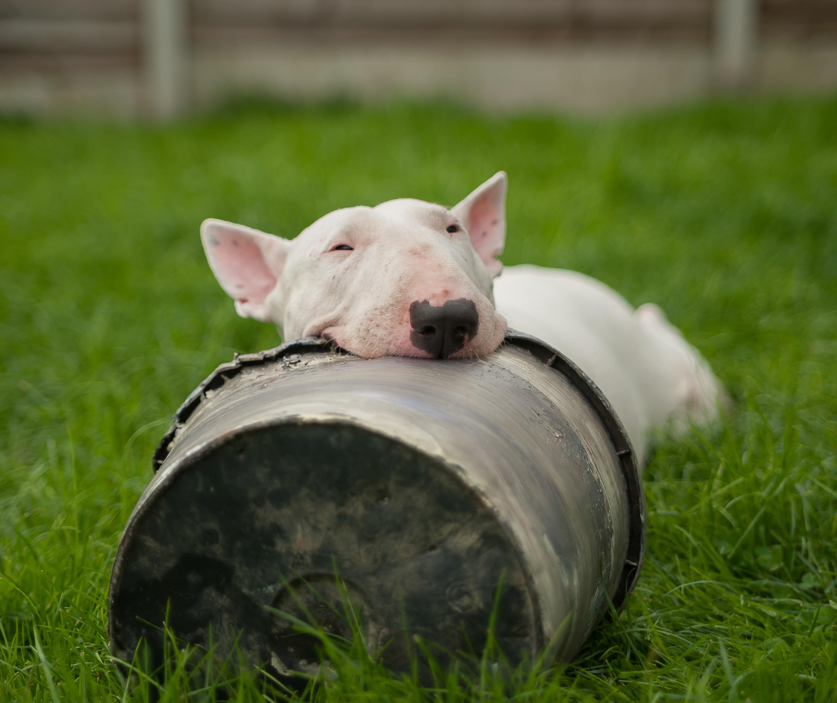 Hundsports kurs