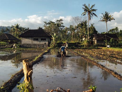 Hurricane Dorian-Preparation for natural disasters