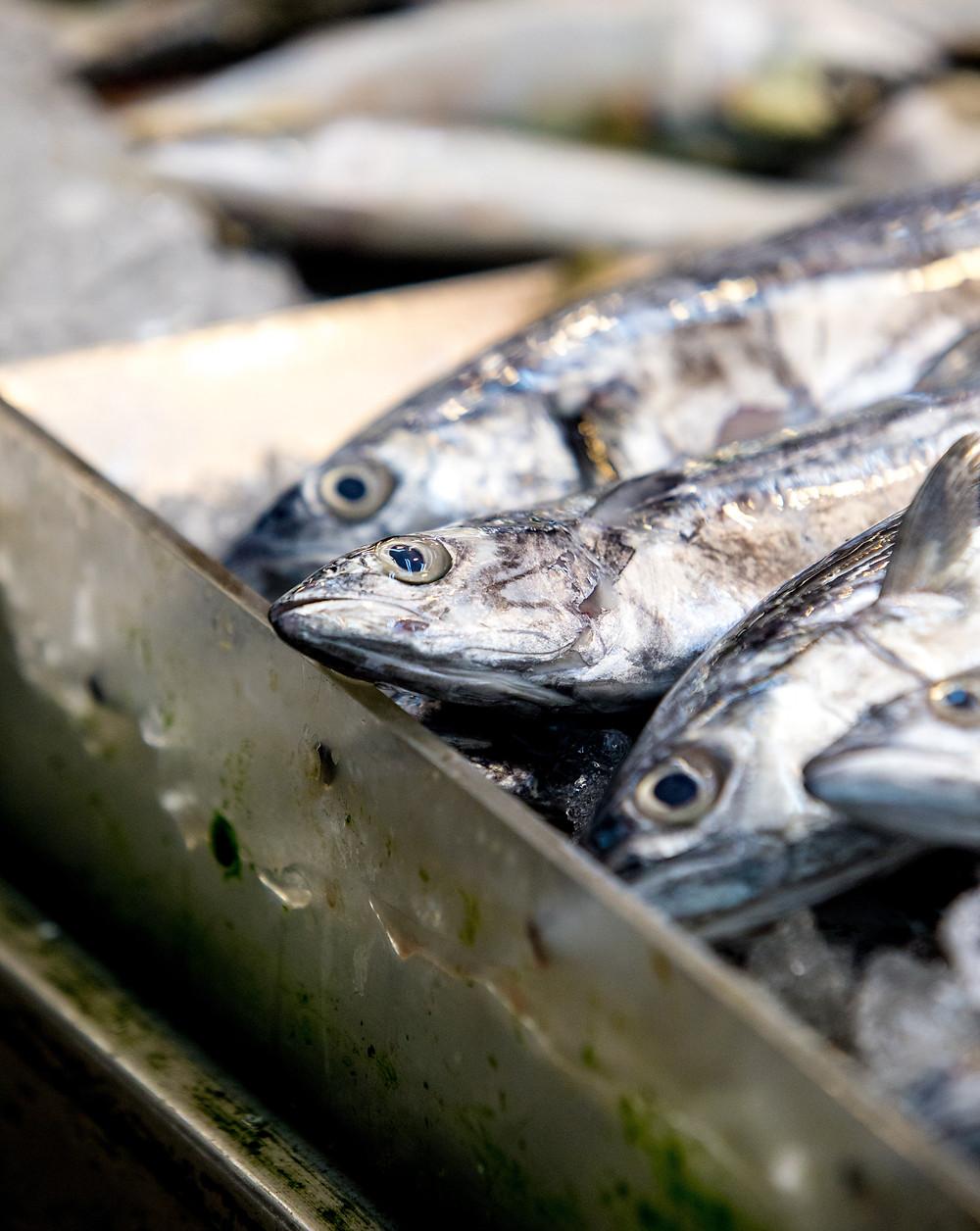 Tray of herrings