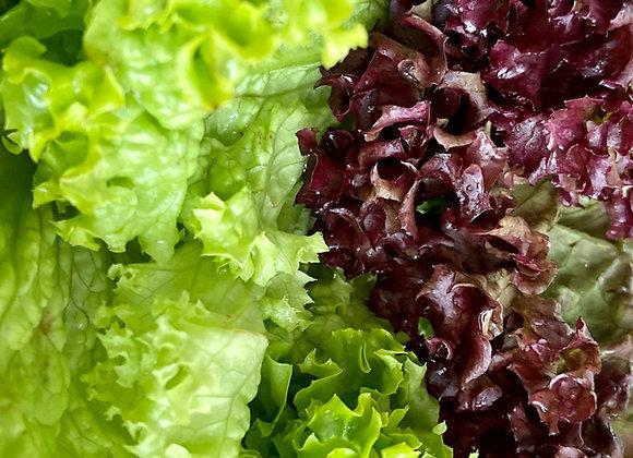 Fancy Lettuce (per item)