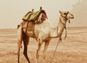 Prodromal Labor, Not Just for Camels