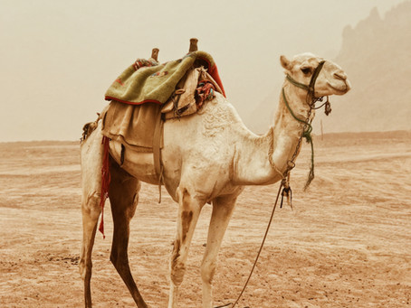 Prodromal Labor, Not Just for Camels