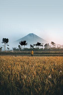Image by Ifan Bima