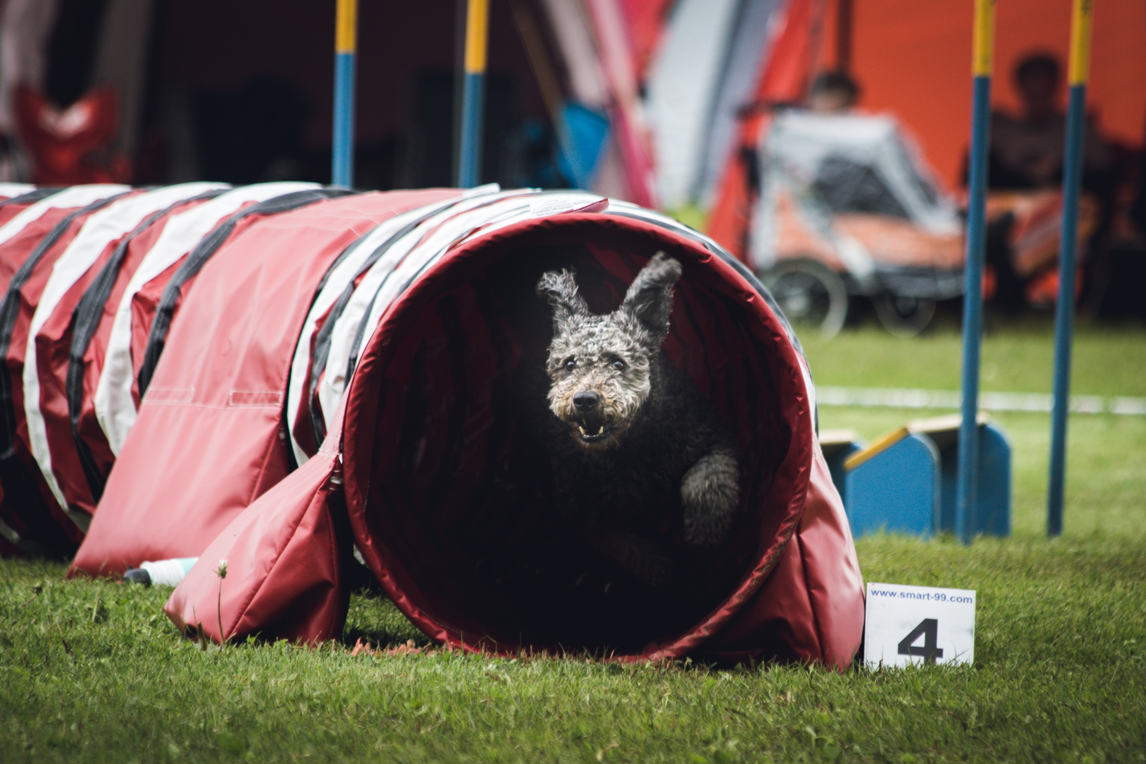 Agility for FUN!!! Thurs., Sept. 9th 5pm
