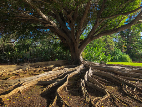 Lia Nizen - Roots Reborn