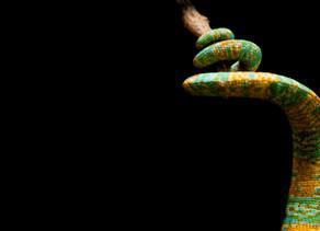 Over slangen en duiven