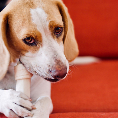 Rawhides Or Antlers: Which Should You Give Your Dog?