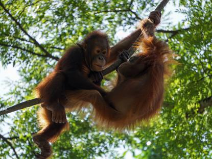 Borneo, Borneo, Wherefore art thou Borneo.