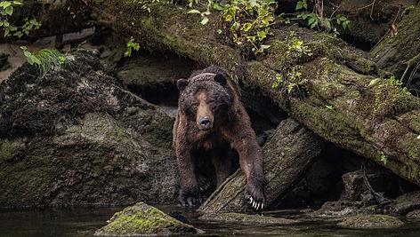 Image by Thomas Lipke