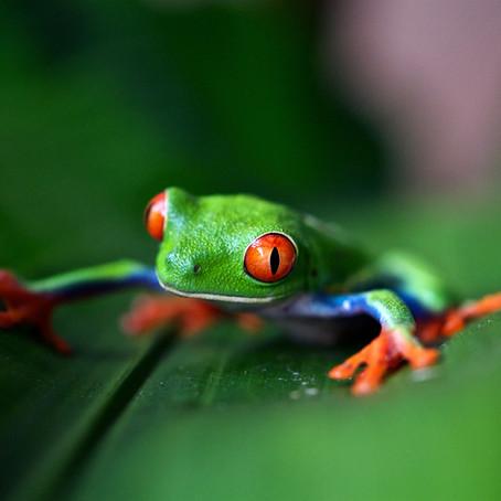 Costa Rica's Wildlife Hotspots