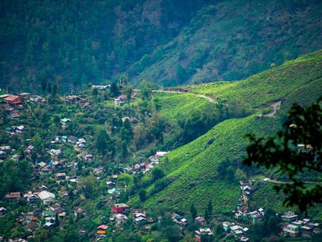 Darjeeling d'été, de printemps, d'automne... Quelles différences?