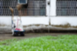 Gardening St Ives