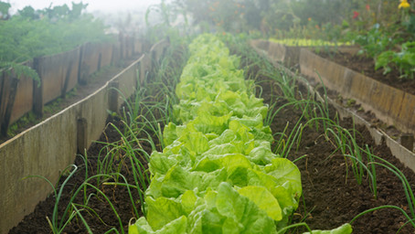 Weather Induced Garden Failure, Avoidable by Indoor Farming
