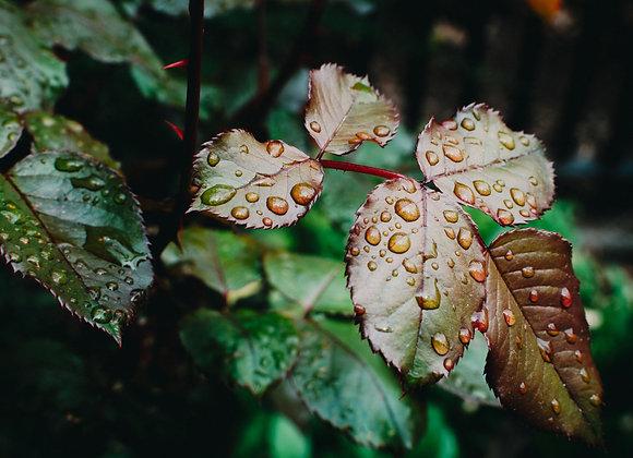 Regen meditatie