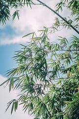 Image by Minh Trí